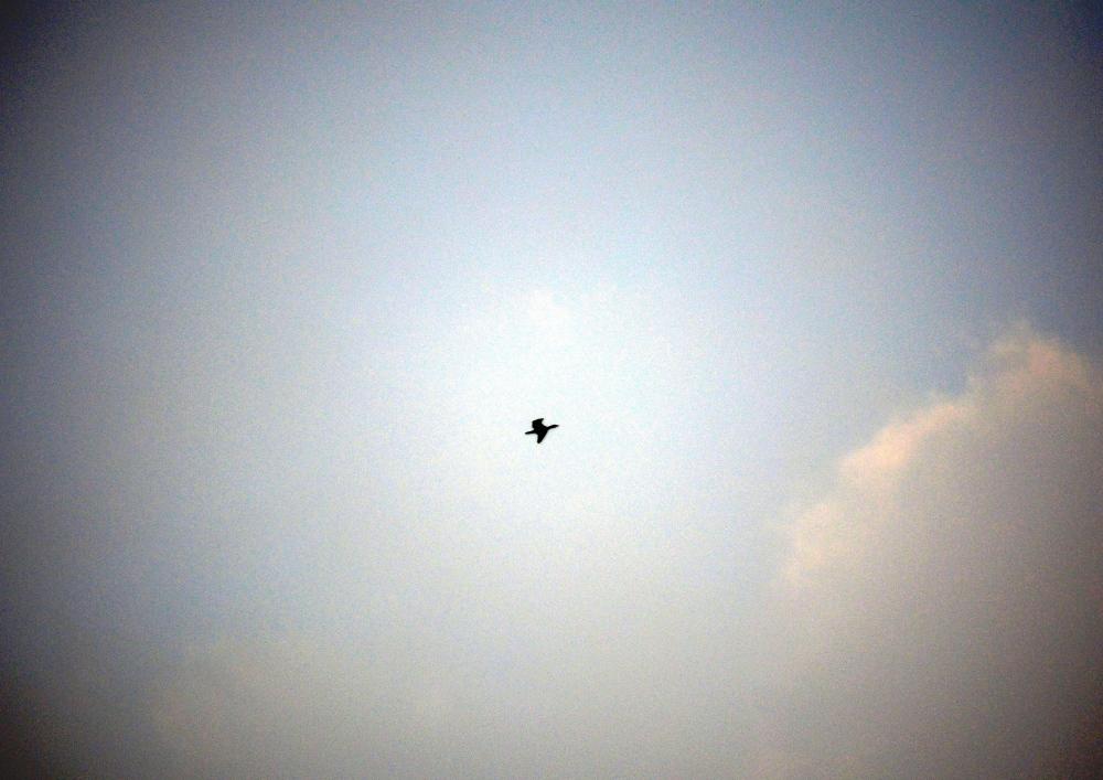 A Solo Flight