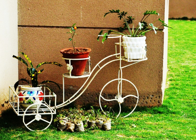 Garden on Cycle.