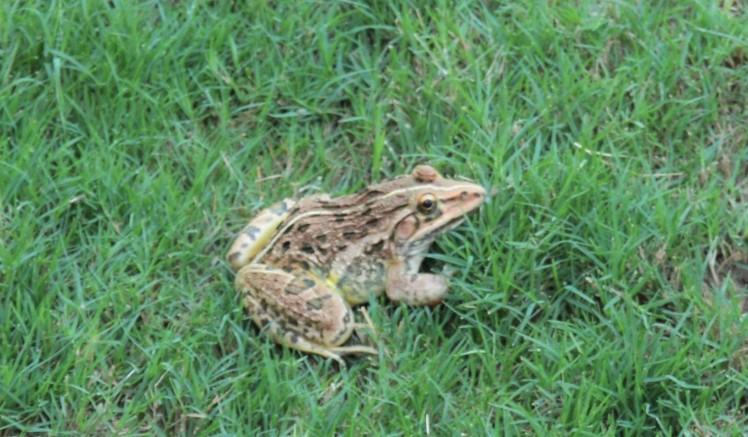 frog2-2