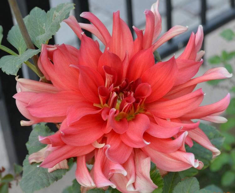 deliaflower