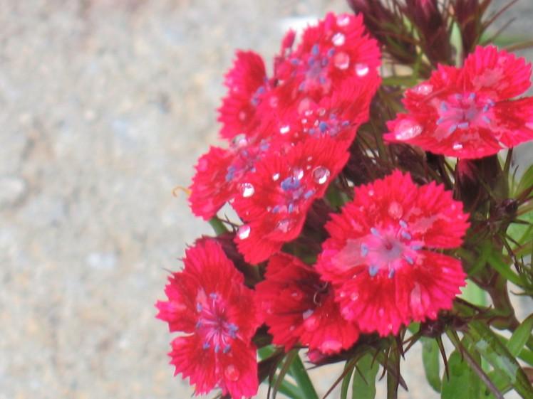 flowerdew