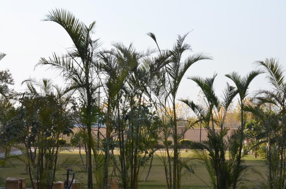 bambooplants